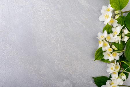 jasmine flowers background