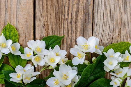 Jasmine, jasmine flowers