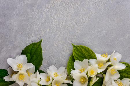 jasmine  flowers on  a grey background