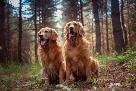 animal lover: Portrait of a beautiful  two dogs  outdoors