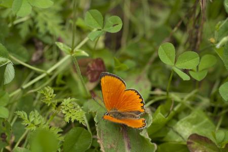 Orange butterfly on flower. Macro.