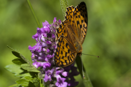 Butterfly on flower. Macro. Stock Photo