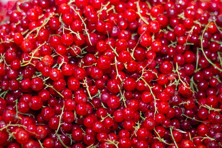 a lot: the berries of the red currant lot