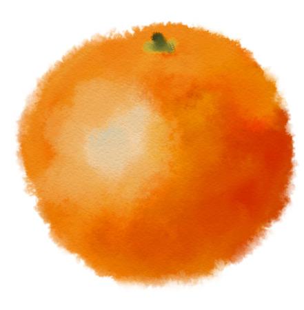 mandarins: Image of watercolor orange Hand drawn picture