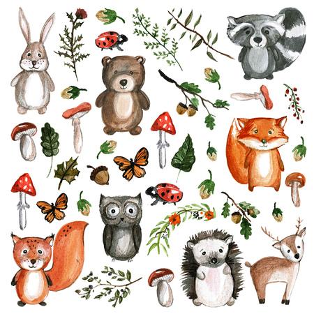 Carino animali del bosco acquerello animali icone