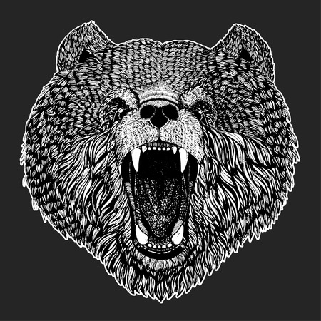 agressive: Wild bear Vector image for tattoo, t-shirt, posters Hand drawn illustration