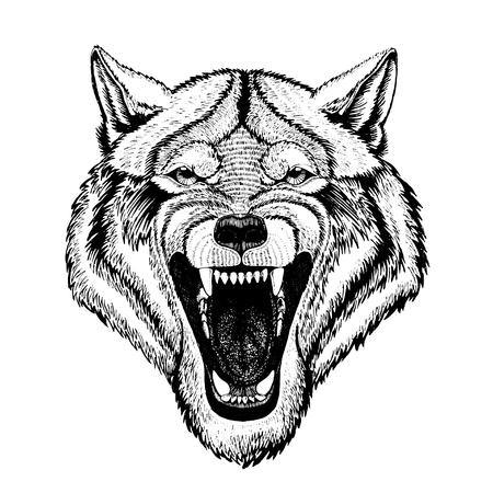 agressive: Vector wild wolf for tattoo, t-shirt, sport logo