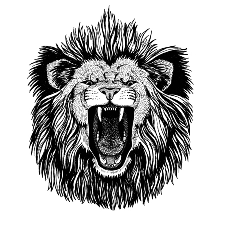 Wild cat King lion Roaring lion