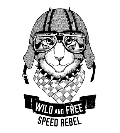 grey cat: Wild cat Wild cat Be wild and free T-shirt emblem, template Biker, motorcycle design Hand drawn illustration Stock Photo