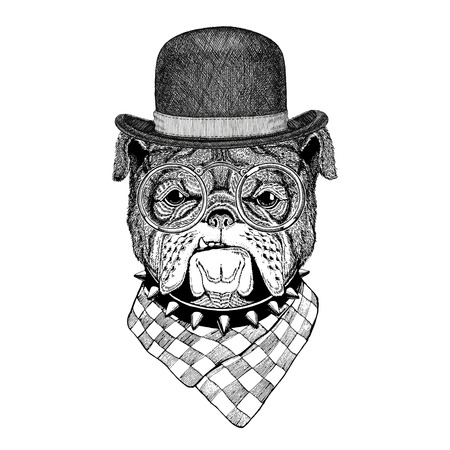 Bulldog Image for tattoo, , emblem, badge design