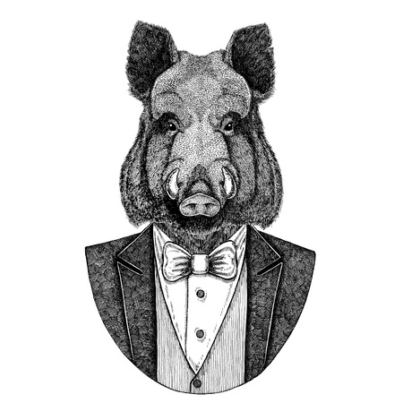 Aper, boar, hog, wild boar, hog, Hipster animal Hand drawn image for tattoo, emblem, badge, logo, patch, t-shirt Zdjęcie Seryjne