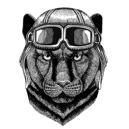Panther Puma Cougar Wild cat wearing leather helmet Aviator, biker, motorcycle Hand drawn illustration for tattoo, emblem, badge,    patch Stock Photo