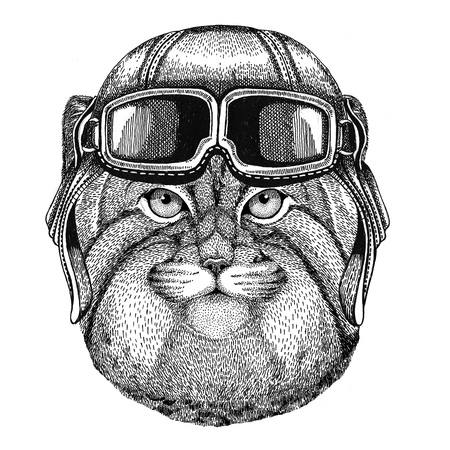 mustached: Wild cat Manul wearing leather helmet Aviator, biker, motorcycle Hand drawn illustration for tattoo, emblem, badge, logo, patch