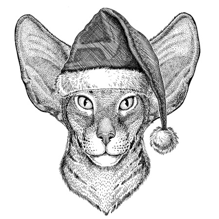 nobleness: Oriental cat with big ears christmas hat New year eve Merry christmas and happy new year Zoo life Holidays celebration Santa Claus hat