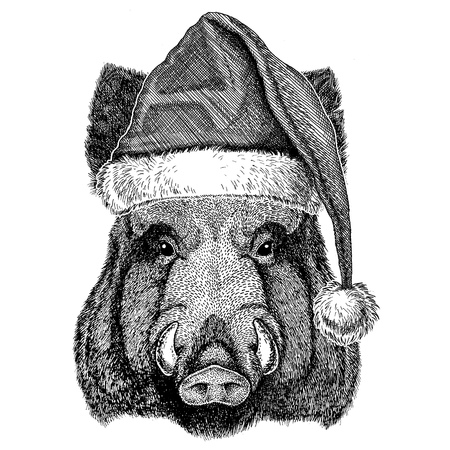 Aper, boar, hog, hog, wild boar wearing christmas hat New year eve Merry christmas and happy new year Zoo life Holidays celebration Santa Claus hat Stock Photo