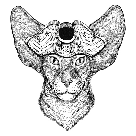 Oriental cat with big ears wearing pirate hat Cocked hat, tricorn Sailor, seaman, mariner, or seafarer