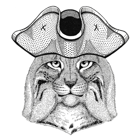Wild cat Lynx Bobcat Trot wearing pirate hat Cocked hat, tricorn Sailor, seaman, mariner, or seafarer
