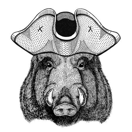 Aper, boar, hog, hog, wild boar wearing pirate hat Cocked hat, tricorn Sailor, seaman, mariner, or seafarer