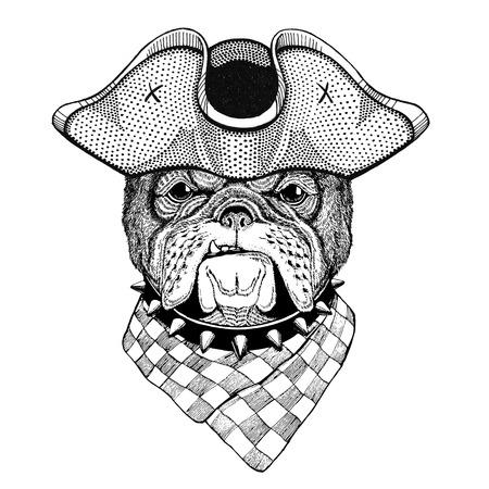 Bulldog wearing pirate hat Cocked hat, tricorn Sailor, seaman, mariner, or seafarer Reklamní fotografie