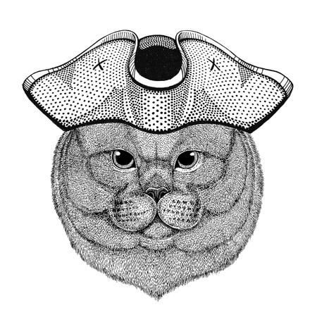 Brithish noble cat Male wearing pirate hat Cocked hat, tricorn Sailor, seaman, mariner, or seafarer Reklamní fotografie