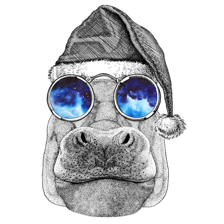 Hippo, Hippopotamus, behemoth, river-horse wearing christmas hat New year eve Merry christmas and happy new year Zoo life Holidays celebration Santa Claus hat