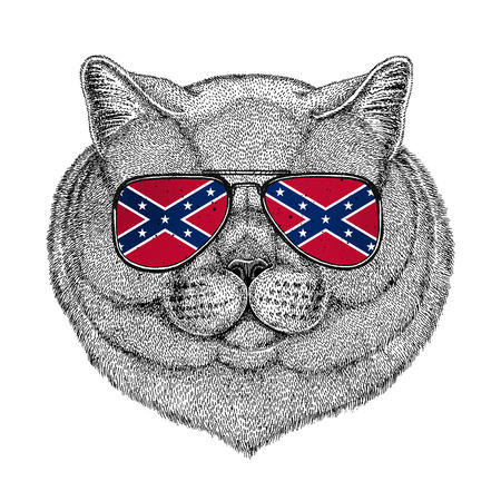 British noble cat Male wearing glasses with National flag of the Confederate States of America Stock Photo