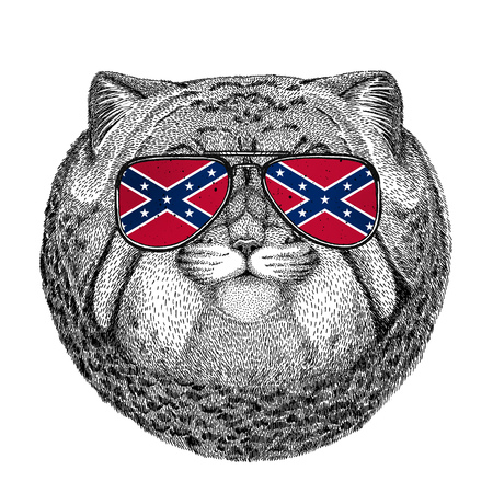 Wild cat Manul wearing glasses with National flag of the Confederate States of America Usa flag glasses Wild animal