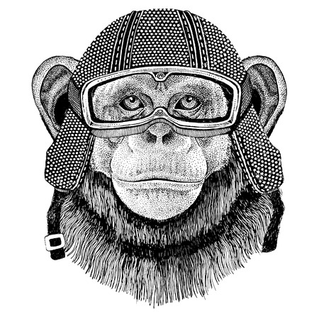 Wild animal wearing vintage motorcycle helmet Stock Photo