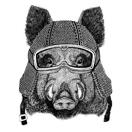 Aper, boar, hog, hog, wild boar wearing vintage motorcycle helmet Tattoo, badge, emblem, logo, patch, t-shirt Stock Photo