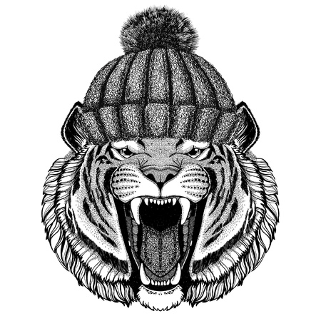 Wild tiger wearing winter knitted hat