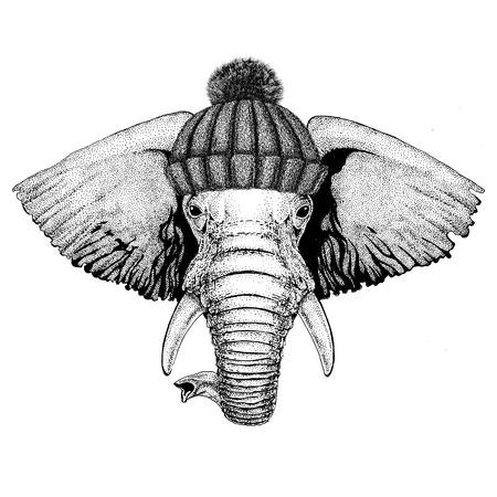 Elefante africano o indiano che indossa cappello invernale maglia Archivio Fotografico - 80708961