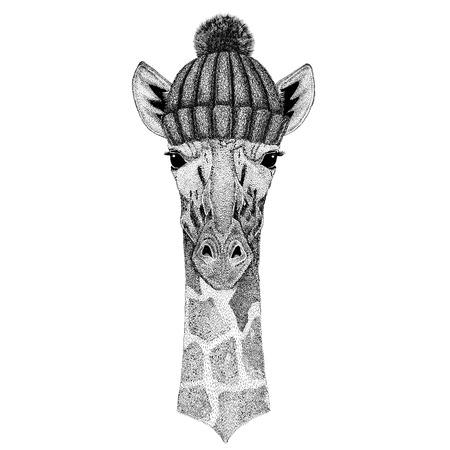 Camelopard, jirafa que usa el sombrero hecho punto invierno Foto de archivo - 80708963