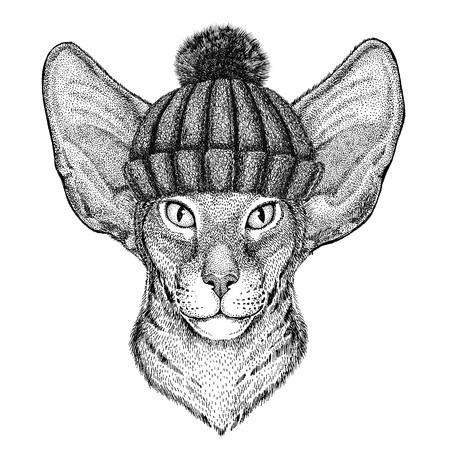nobleness: Oriental cat with big ears wearing winter knitted hat