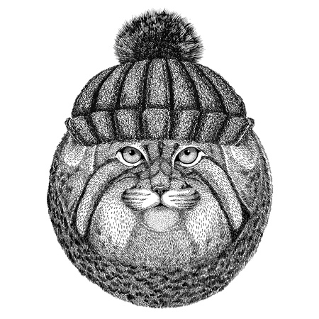 Wild cat Manul wearing winter knitted hat