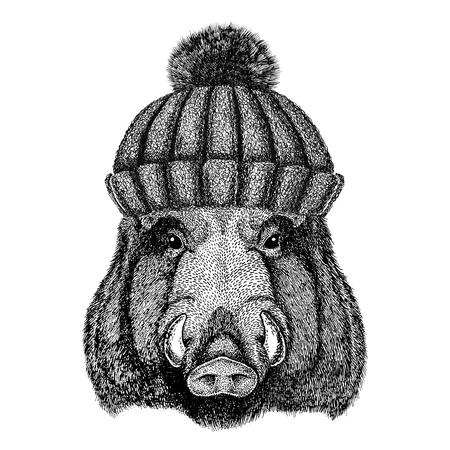 Aper, cinghiale, hog, hog, cinghiale che indossa il cappello a maglia invernale Archivio Fotografico - 80708980
