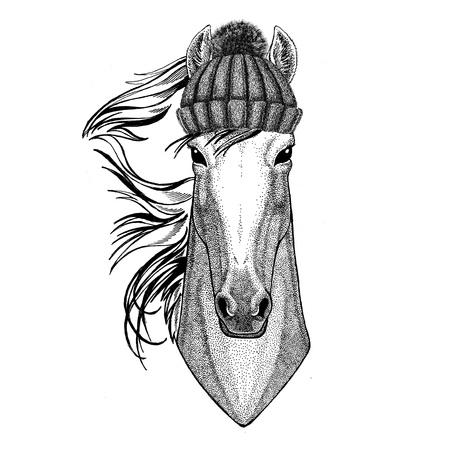 Cavallo, hoss, cavaliere, destriero, courser che indossano cappello lavorato a maglia invernale Archivio Fotografico - 80708988