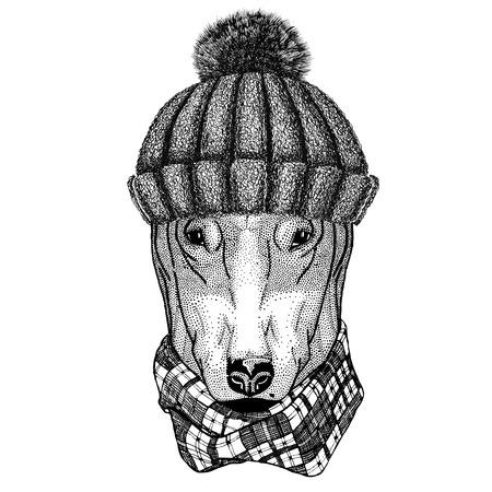 Cane per t-shirt disegno che indossa cappello invernale lavorato a maglia Archivio Fotografico - 80708985
