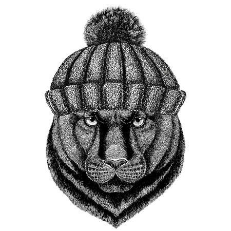 Panther Puma Cougar Wild cat wearing winter knitted hat