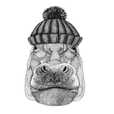 Hippopotame, hippopotame, béhémoth, cheval de rivière portant un bonnet d'hiver Banque d'images - 80709016