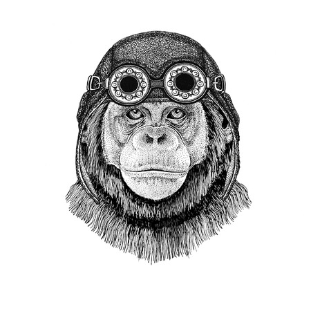 Chimpanzee Monkey wearing aviator hat Motorcycle hat with glasses for biker Illustration for motorcycle or aviator t-shirt with wild animal Stock Photo