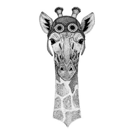 Camelopard, girafe portant le chapeau d'aviateur Chapeau de moto avec des lunettes pour biker Illustration pour le t-shirt de moto ou d'aviateur avec l'animal sauvage Banque d'images - 80709028