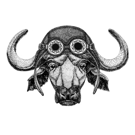 Buffalo, bull, ox wearing aviator hat Motorcycle hat with glasses for biker Illustration for motorcycle or aviator t-shirt with wild animal Stock Photo