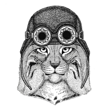 Gato salvaje Lynx Bobcat Trot con sombrero de aviador Sombrero con gafas de motocicleta para motorista Ilustración para motocicleta o camiseta de aviador con animal salvaje Foto de archivo - 80709086