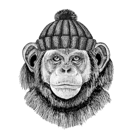 Chimpanzee Monkey wearing winter knitted hat Фото со стока
