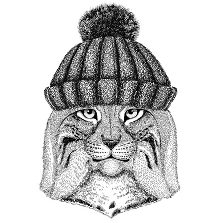 Wild cat Lynx Bobcat Trot wearing winter knitted hat Stock Photo