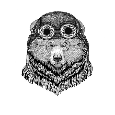 Grizzly bear Big wild bear wearing aviator hat Motorcycle hat with glasses for biker Illustration for motorcycle or aviator t-shirt with wild animal Stock Photo