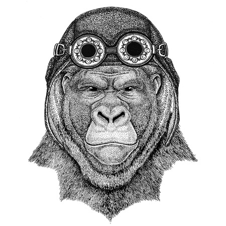 Gorilla, monkey, ape Frightful animal wearing aviator hat Motorcycle hat with glasses for biker Illustration for motorcycle or aviator t-shirt with wild animal