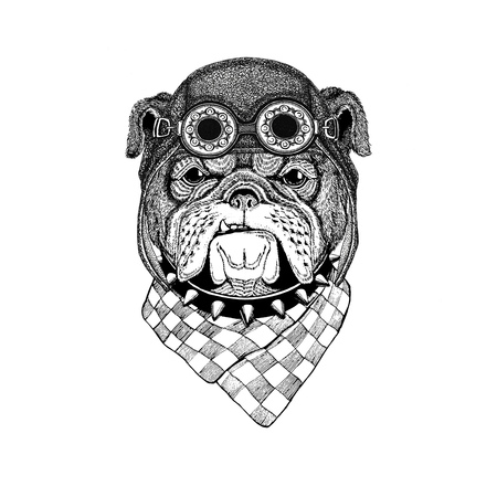Bulldog wearing aviator hat Motorcycle hat with glasses for biker Illustration for motorcycle or aviator t-shirt with wild animal