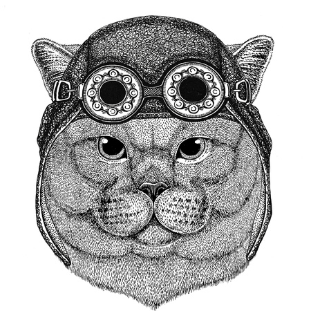 Brithish noble cat wearing aviator hat Motorcycle hat with glasses for biker Illustration for motorcycle or aviator t-shirt with wild animal