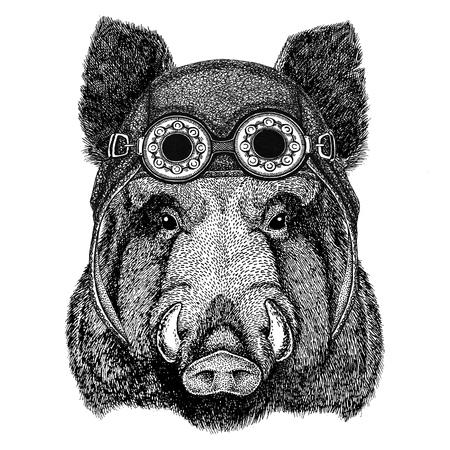 Aper, boar, hog, hog, wild boar wearing aviator hat Motorcycle hat with glasses for biker Illustration for motorcycle or aviator t-shirt with wild animal Stock Photo